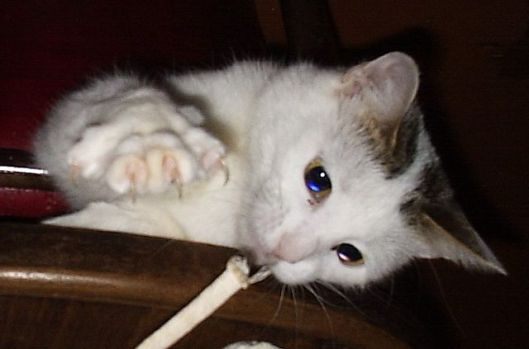 Soft Nail Caps for Cat Claws Humane Alternative To Declawing